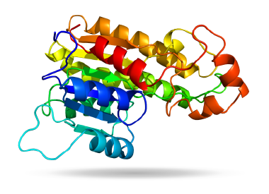 3-D Protein Visualizer