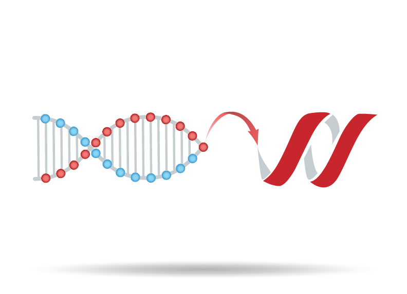 DNA to Protein Translator