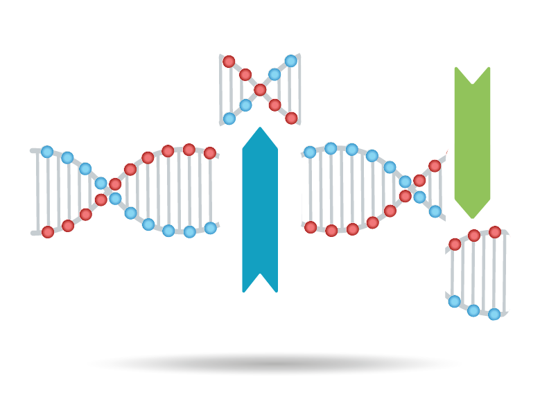 DNA Sequence Cleaner