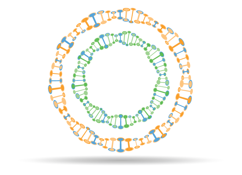 Plasmid Visualizer
